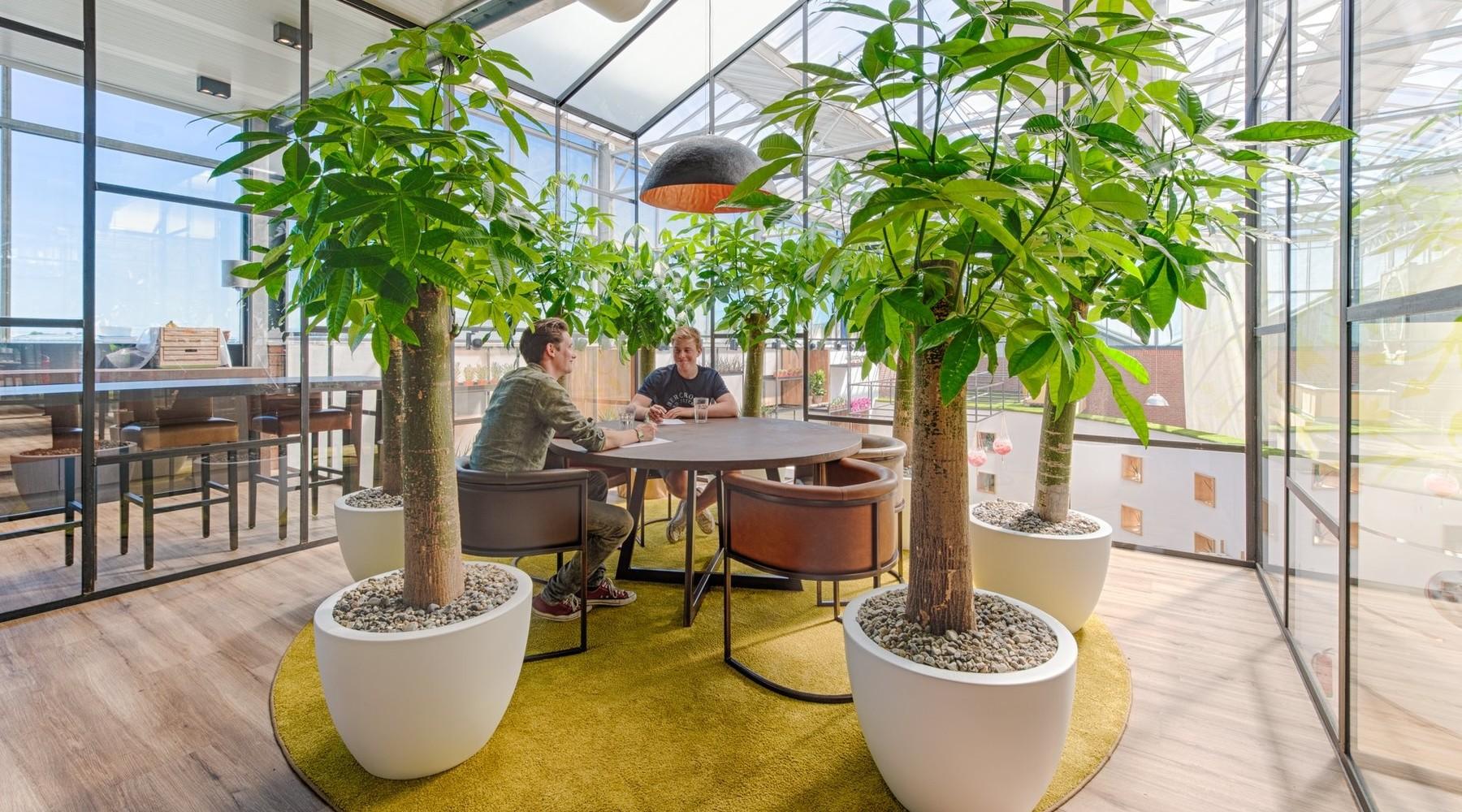 Nieuw in ons assortiment: Wout, een boom van een kamerplant