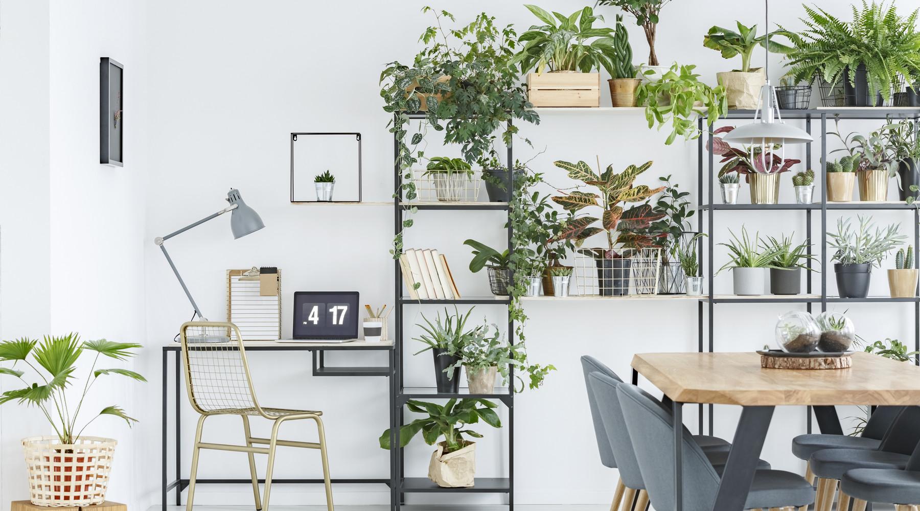 5x Planten voor mensen met groene vingers