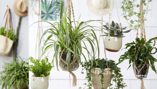 Budget planten