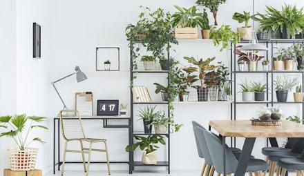 Luxury houseplants