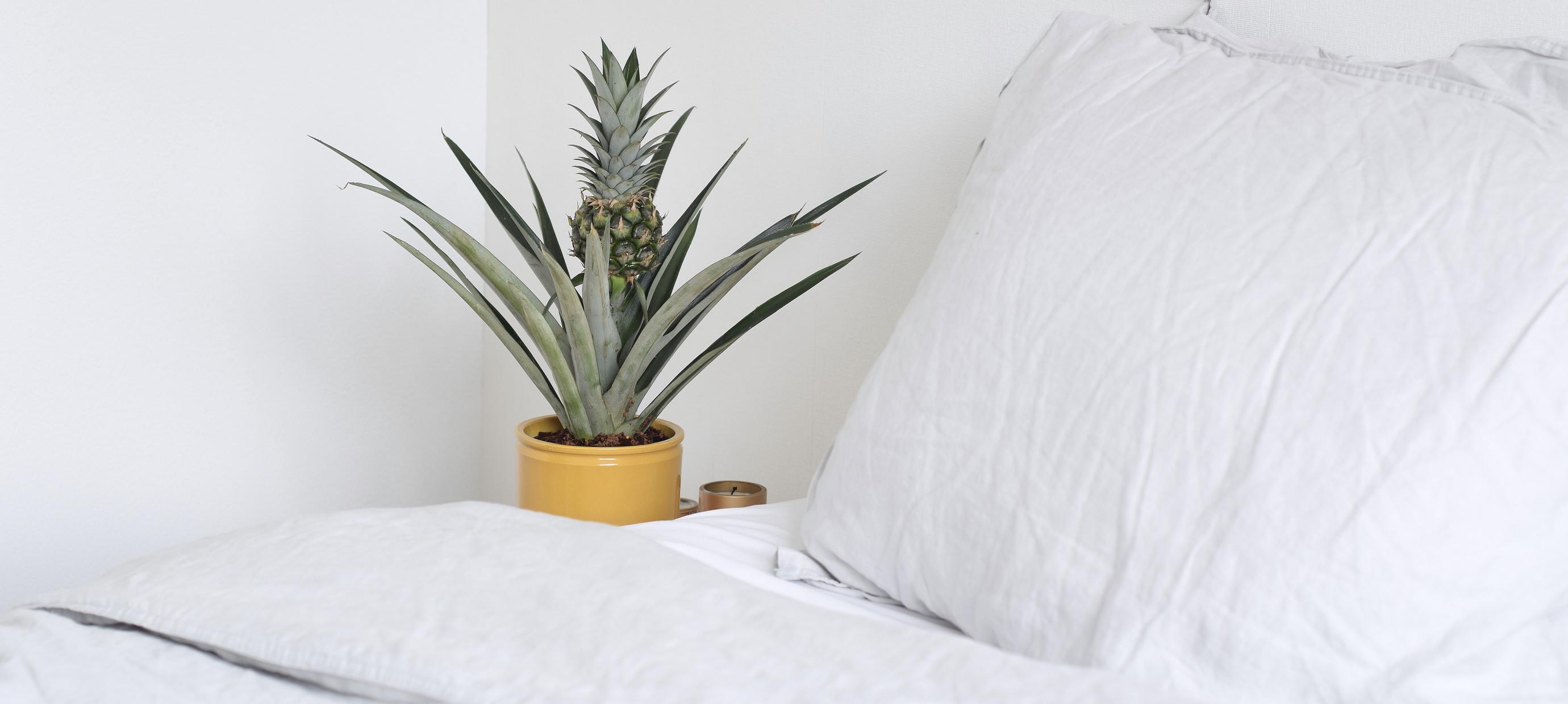 De beste verzorging voor je kamerplanten in de zomer