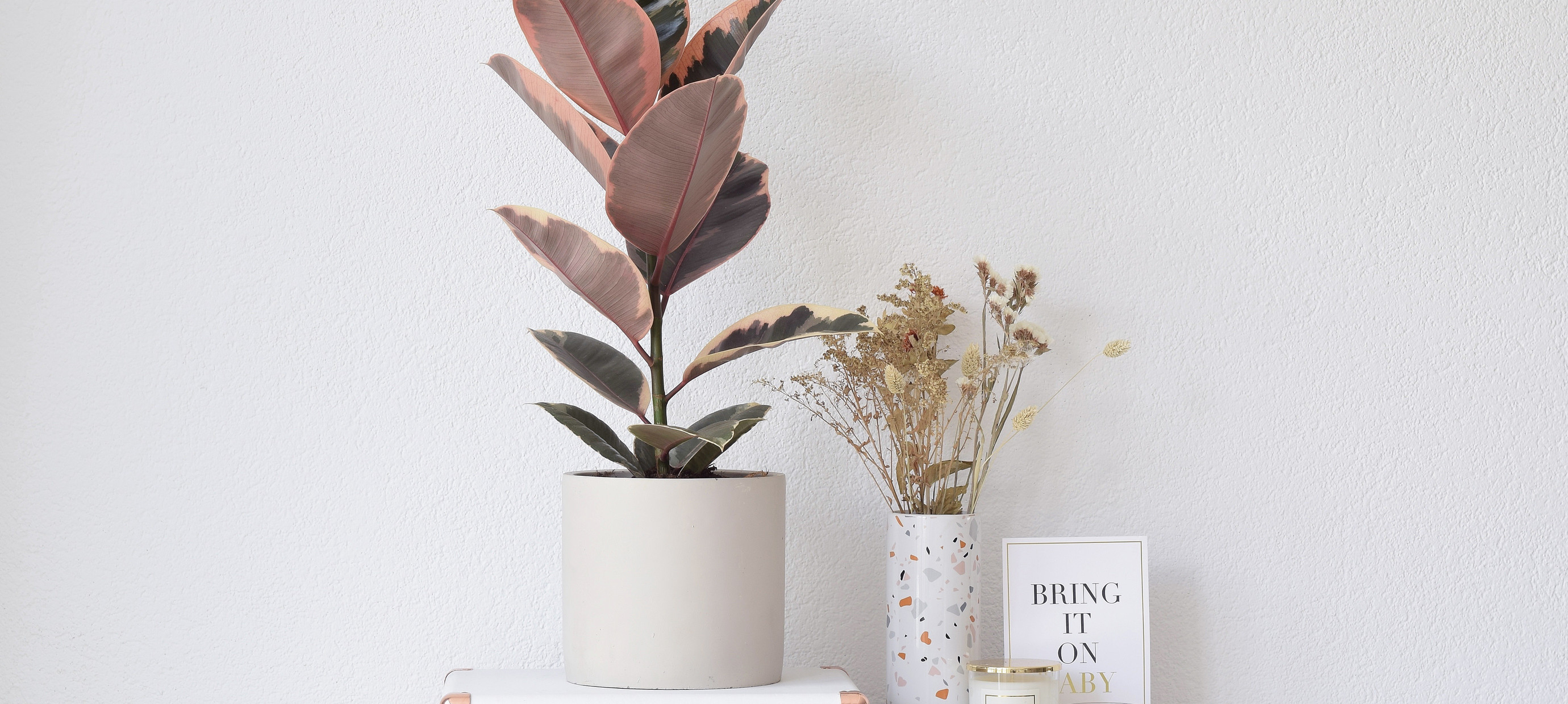Nieuwe trend: Patterned plants