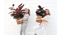 Roze kamerplanten zijn hot!