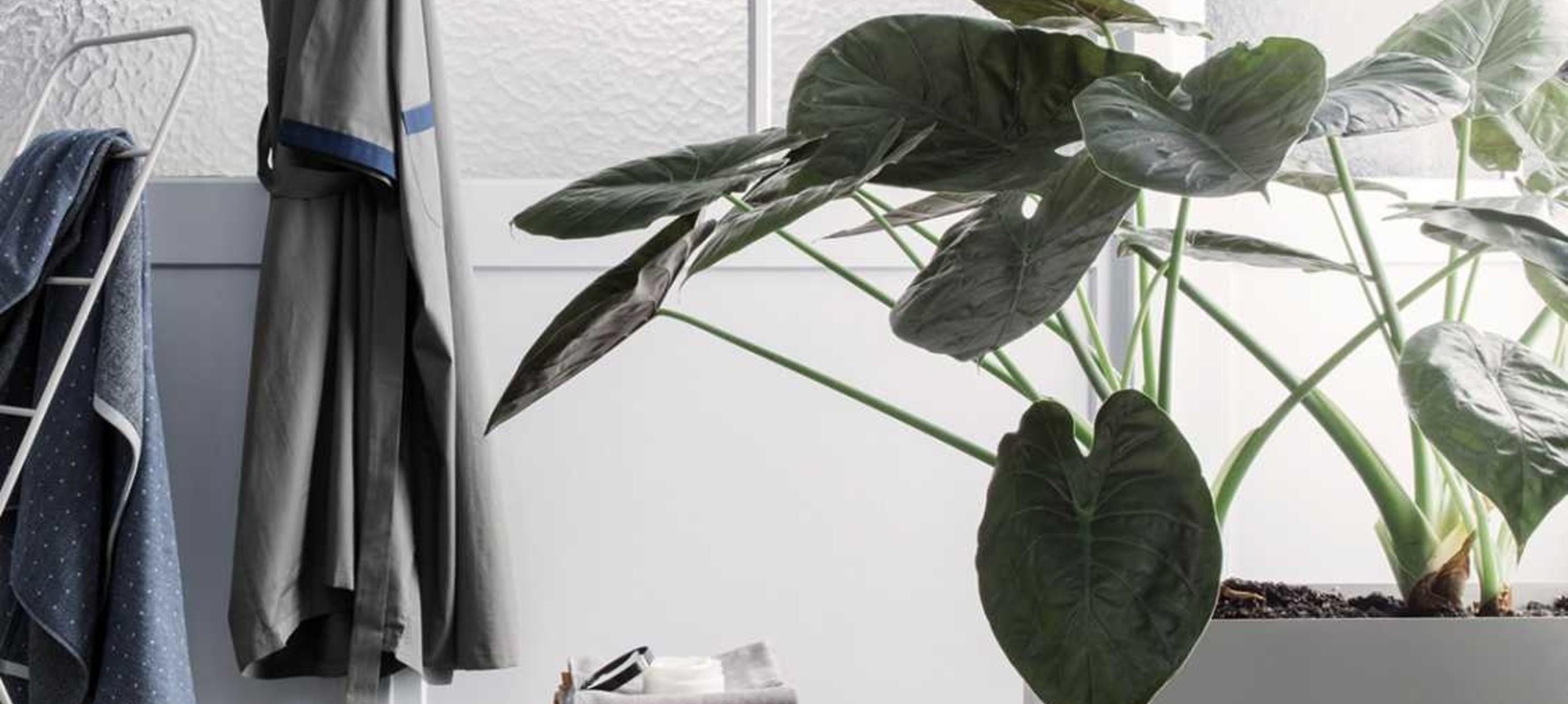 Maak je huis compleet met groen en accessoires