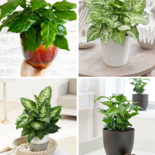 4x Mix of green houseplants
