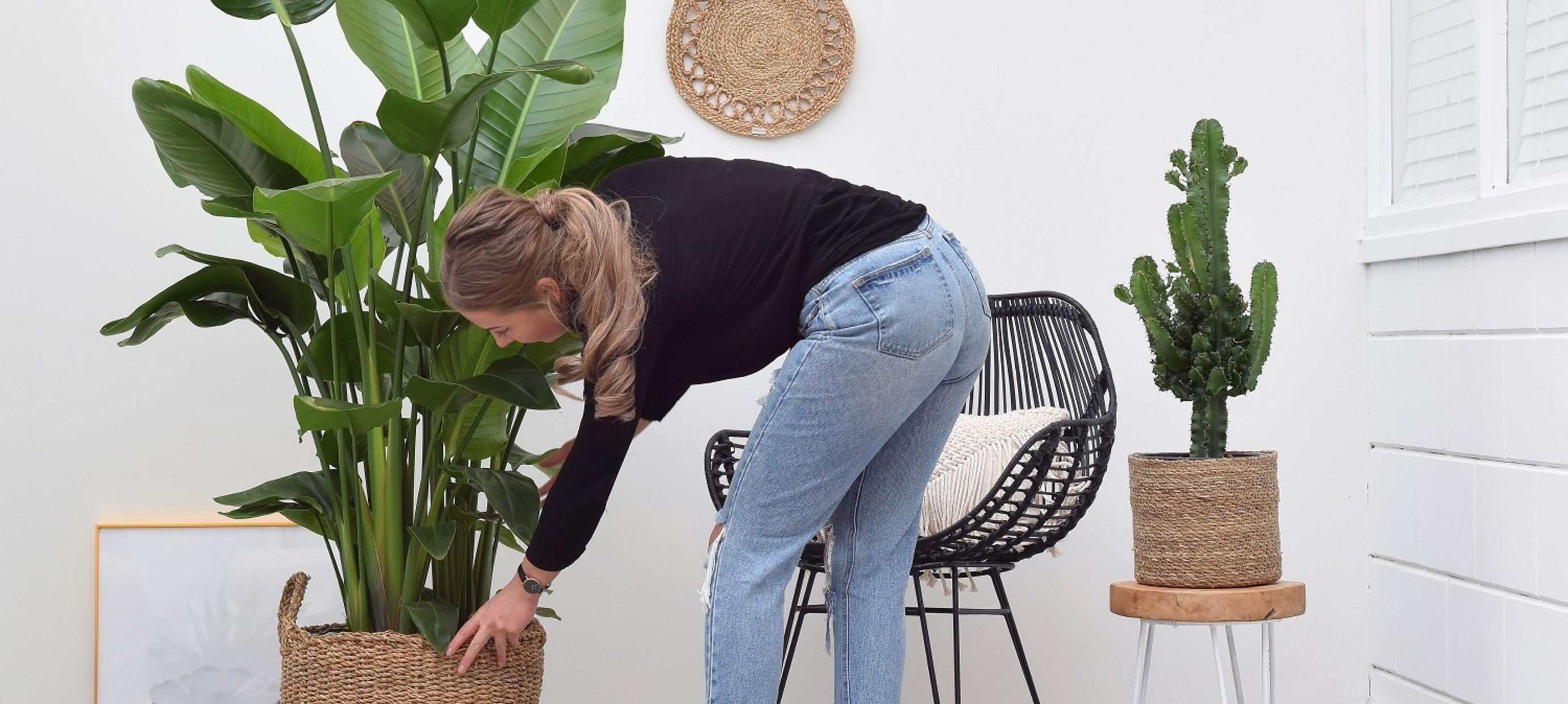 Creëer ruimte in huis met één van deze grote kamerplanten
