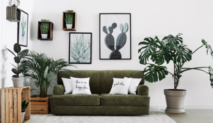 Air-purifying houseplant