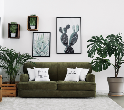 Order an air-purifying houseplant that can convert CO2 into oxygen in your home. These plants also provide better air humidity.
