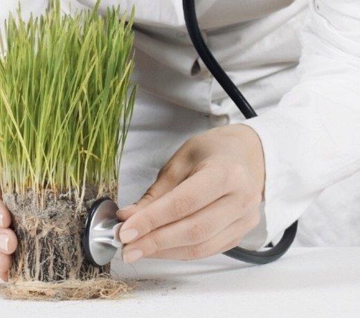 Kranke Pflanze? Wir haben Tipps!
