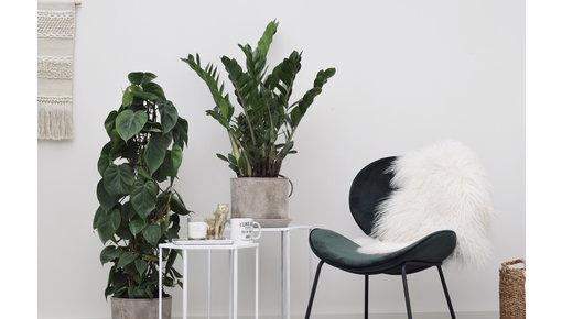 Plant soorten