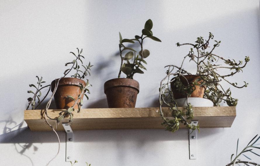De beste verzorging voor je kamerplanten in de winter