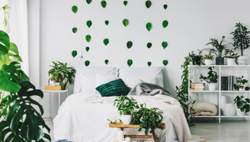 Bedroom plants have a positive effect on your sleep. Create a nice atmosphere in which you can relax completely and shop the plants now!