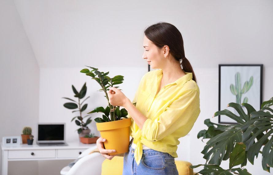 Deze plant past het beste bij je sterrenbeeld
