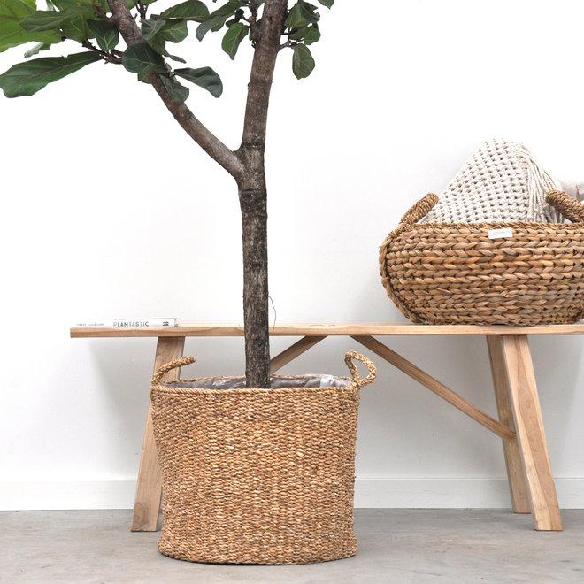 Ficus Lyrata boom XL - 180cm