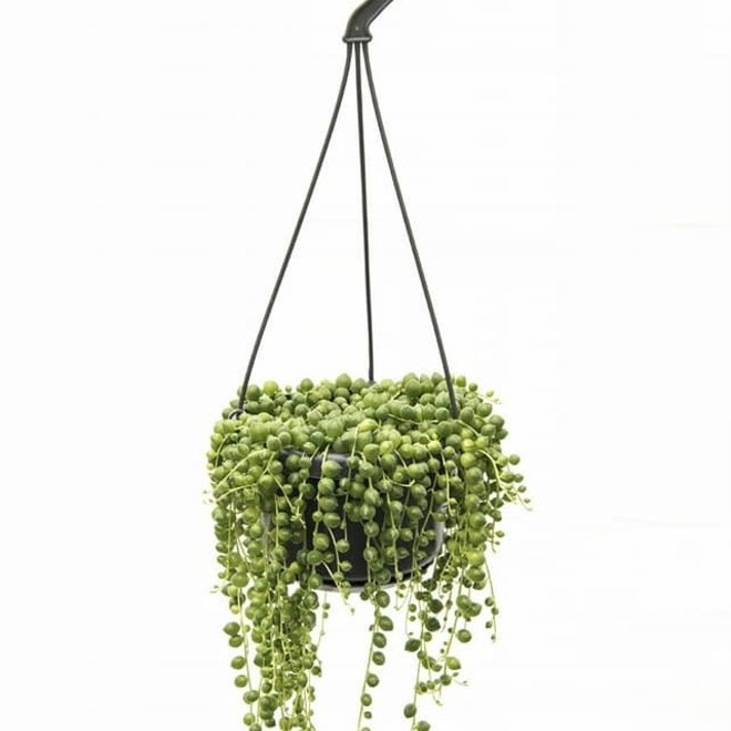 Combi deal - Hang in there pakket (3x hangplant)