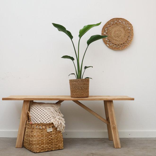 Strelitzia Nicolai combi-deal incl basket scott- 50cm