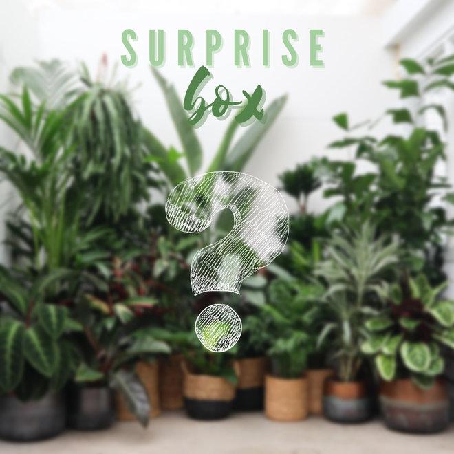 Combi deal - Surprise pakket S