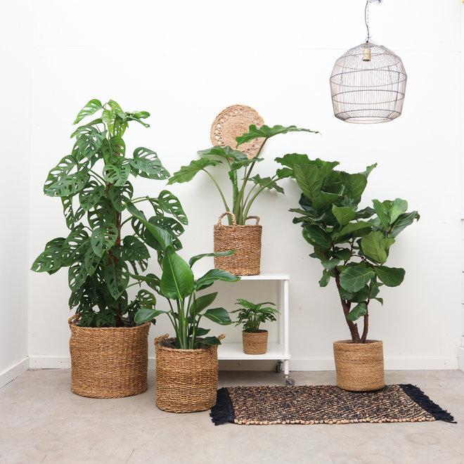 Vorteilspackung grün