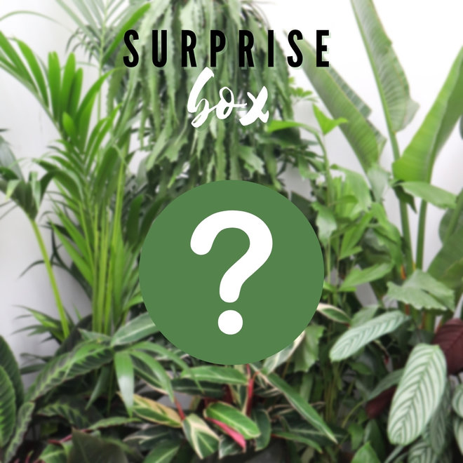 Combi deal - Surprise package M