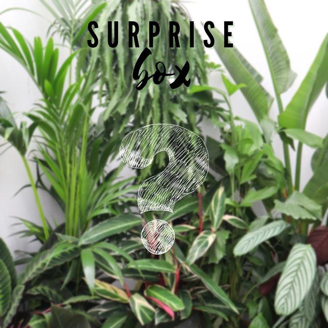 Combi deal - Surprise pakket XL