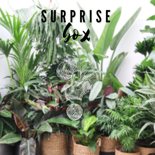 Combi deal - Surprise package XXL