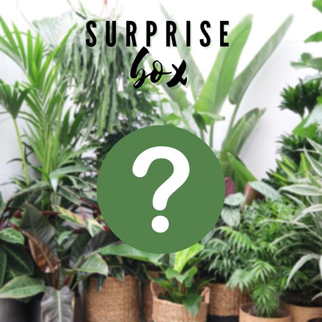 Combi deal - Surprise pakket XS
