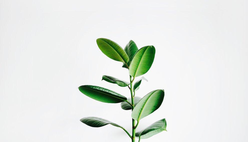 Hoe verzorg je kamerplanten in de winter?