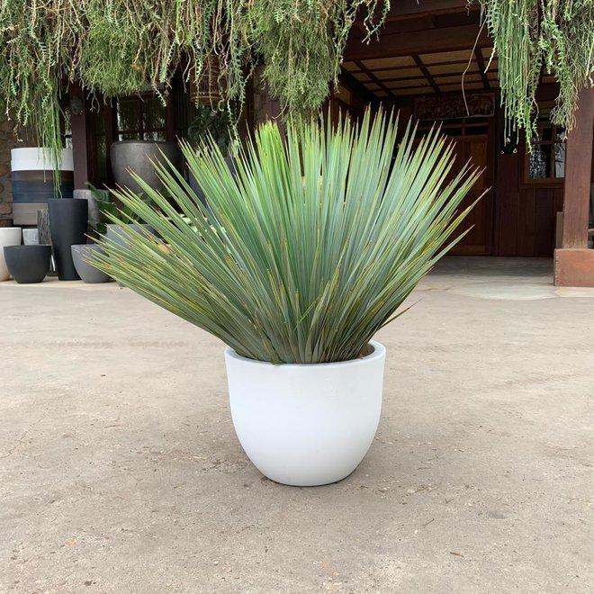 Combi deal - Yucca Rostrata inclusive Eggy pot white - 70 cm