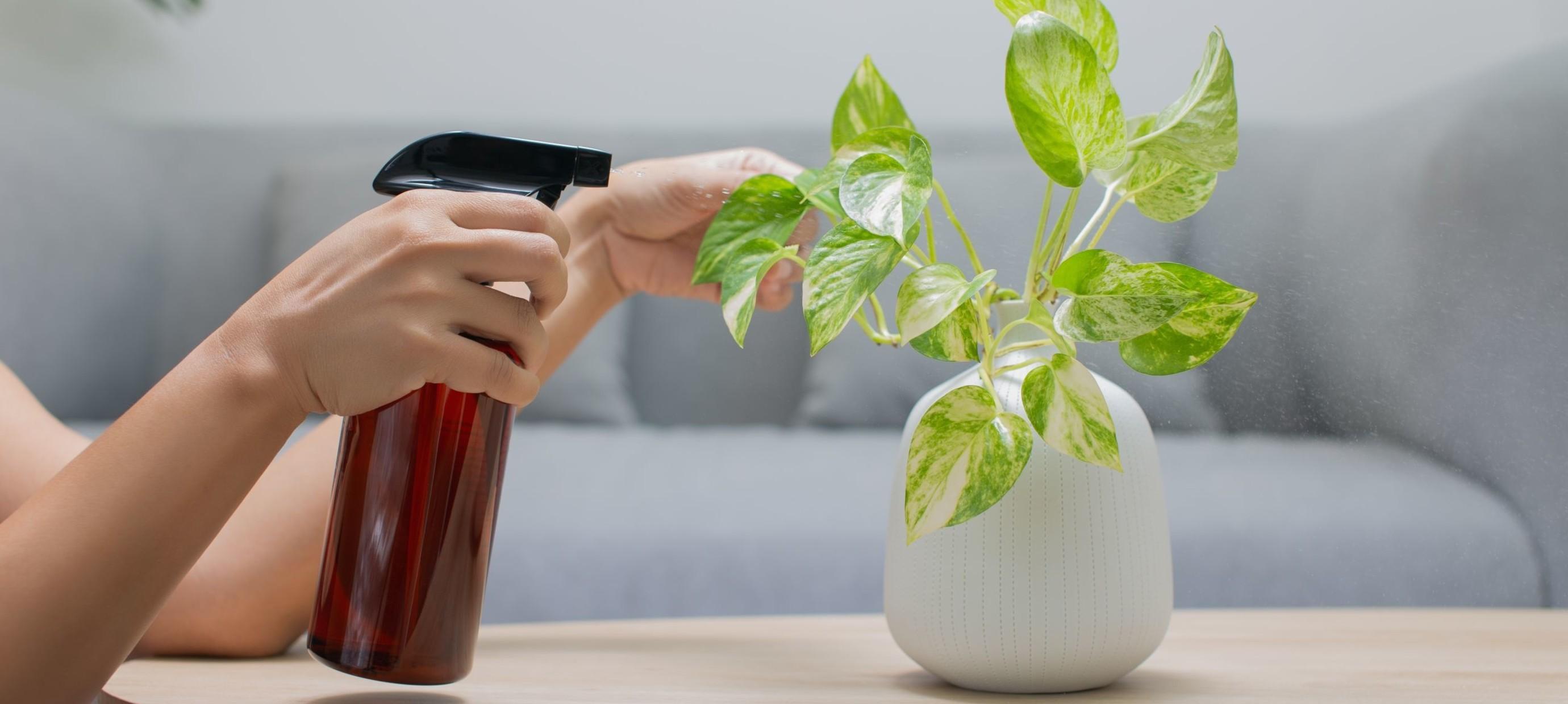 Hoe vaak moet ik voeding geven aan mijn kamerplant?