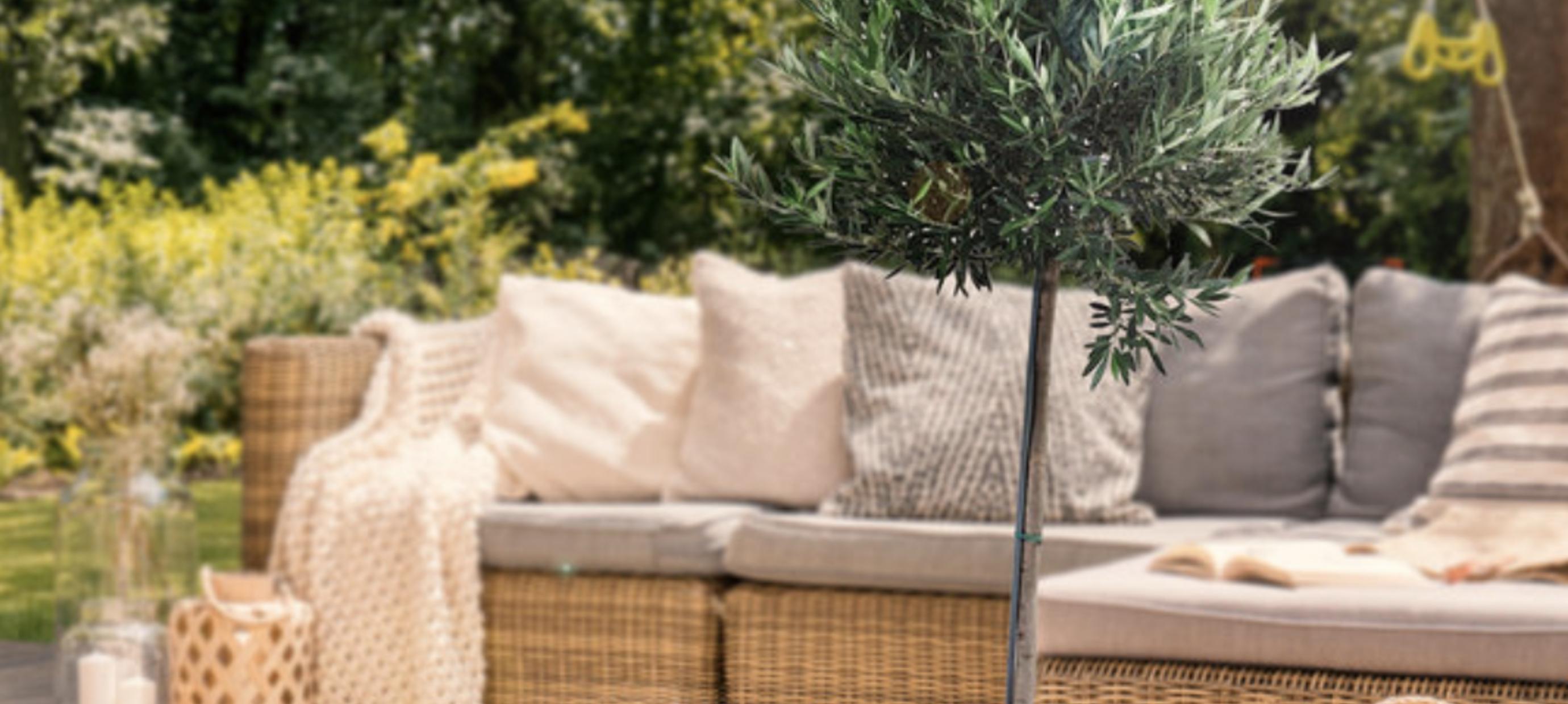 3 tips om jouw buitenplanten groen te houden - Green Bubble