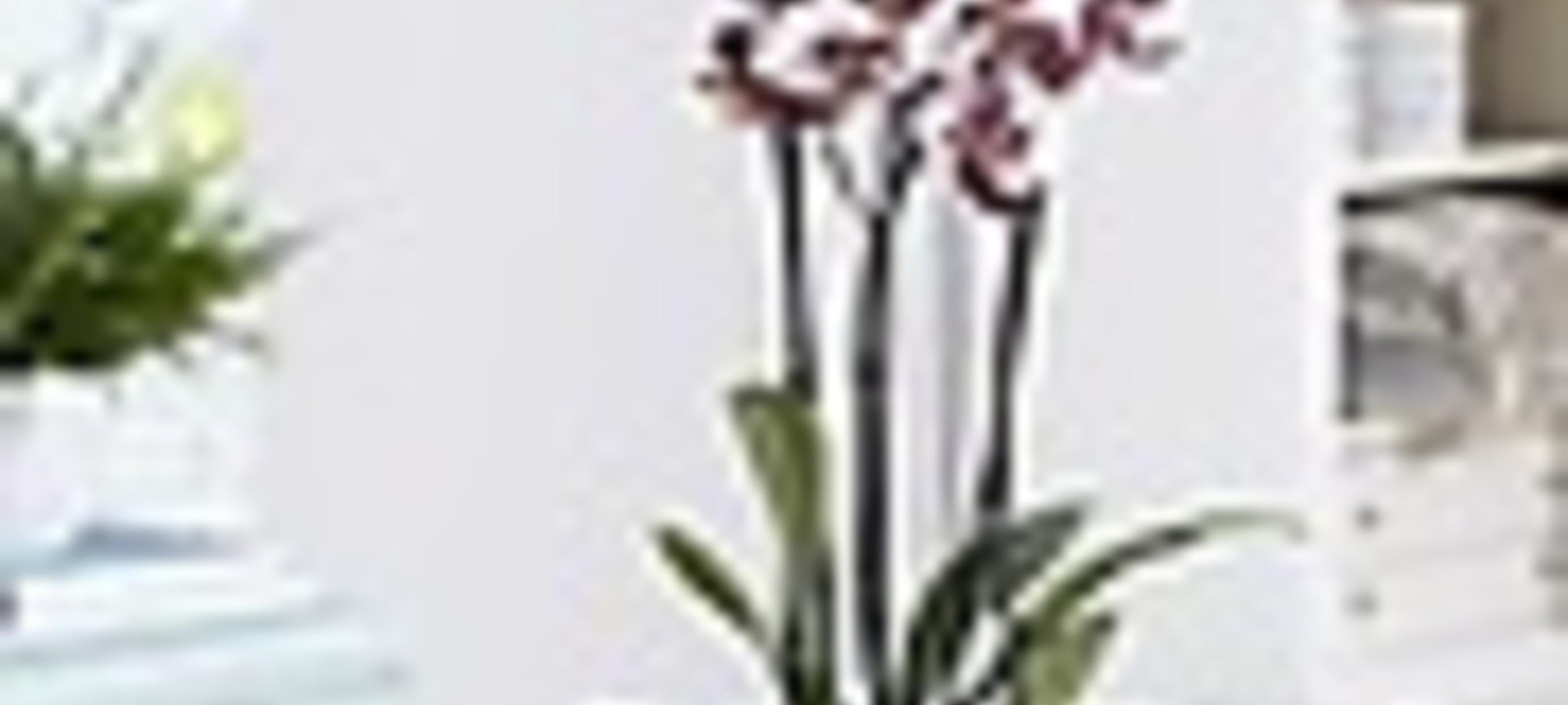 Hoe stek ik mijn orchidee