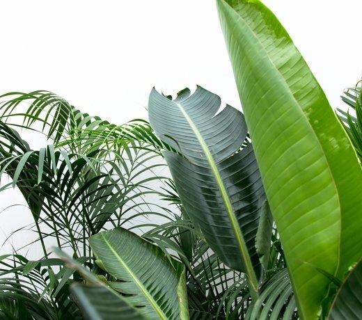 XXL planten