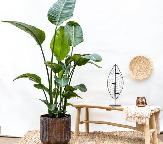 Popular indoor and outdoor plants