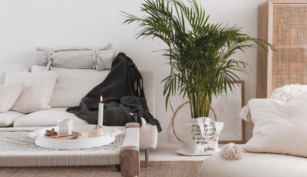 10 verzorgingstips voor jouw kamerplant