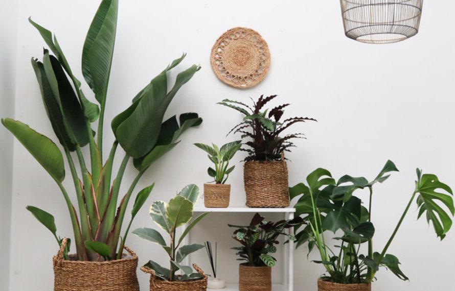 Hoe kies je de juiste plant?