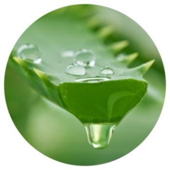 Eliminer l'acide gastrique avec de l'Aloe Vera ?