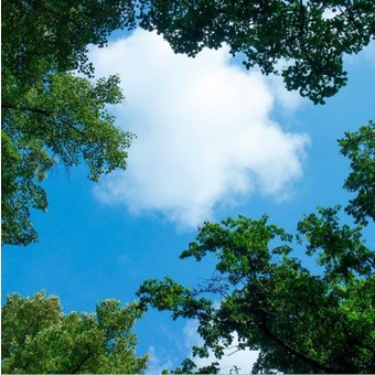 Fotoprint afbeelding Wolken en Bos 60x60cm voor 1x 60x60cm led paneel