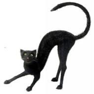 Halloweenaccessoires zwarte kater ware grootte