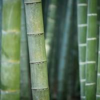 Gevoelige huid? Ga voor een bamboe hamamdoek! Plus nog 6 andere goede redenen om voor bamboe te kiezen