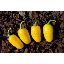 Numex Lemon Spice