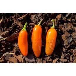 Numex Orange Spice