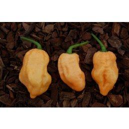 Bhut Jolokia Peach
