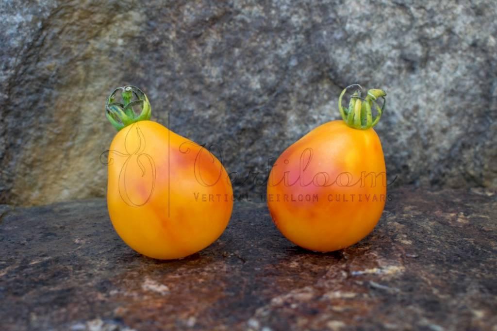 Piedmont Pear