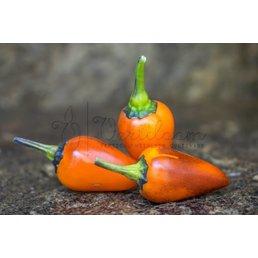 Orange Jes