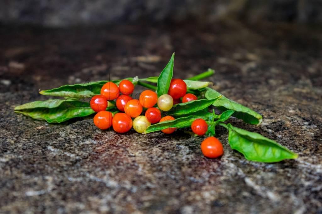 Aji Charapita Red - Ojo de Pescado
