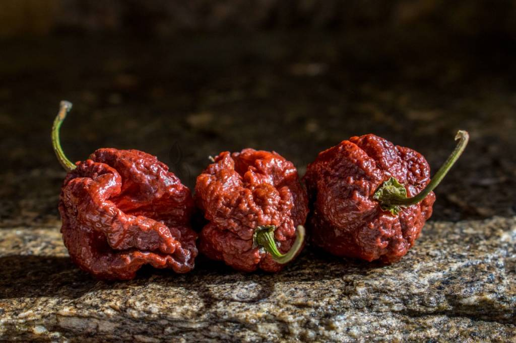 Chocolate Carolina Reaper