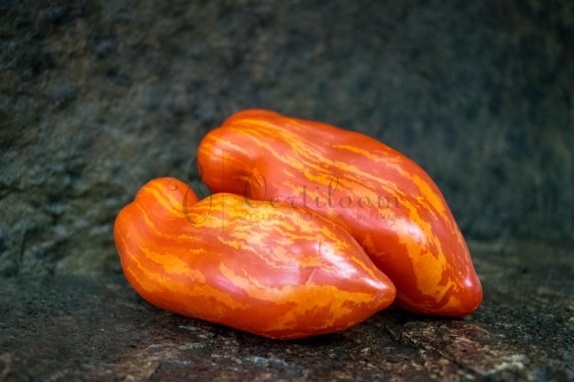 Piprakujuline Triibuline - Перцевидный полосатый