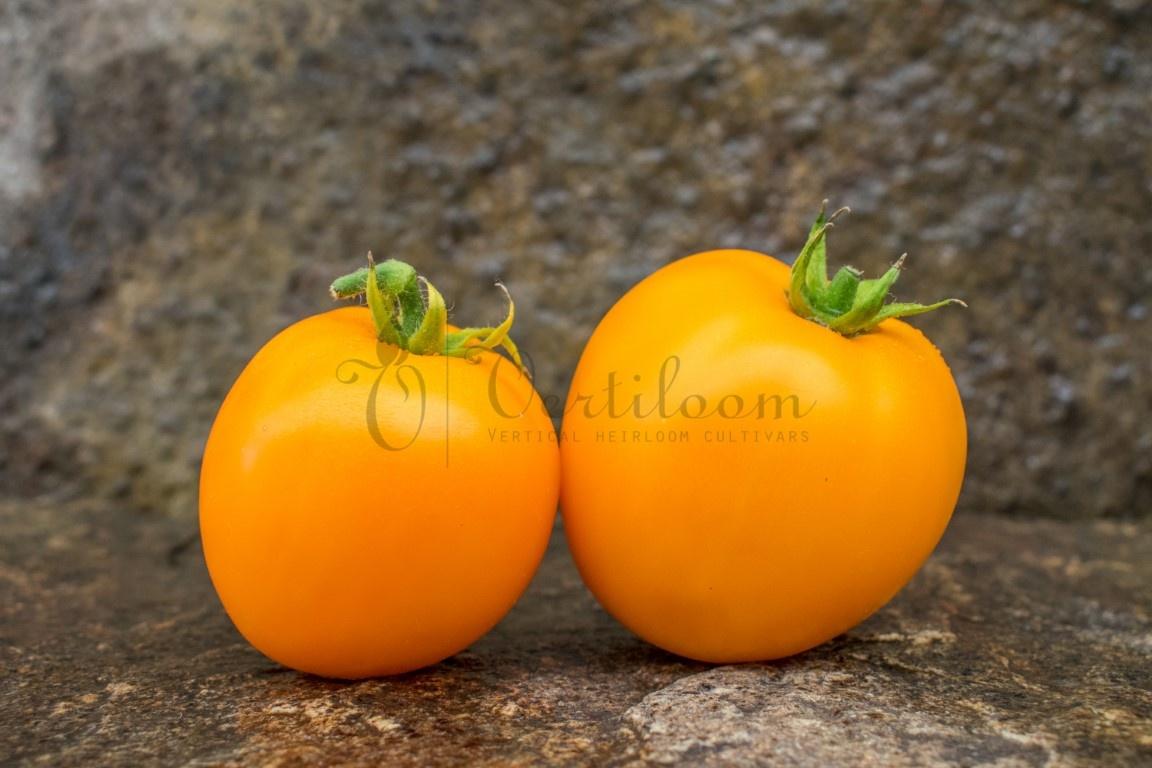 Coastal Pride Orange