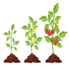 Plant hoogte