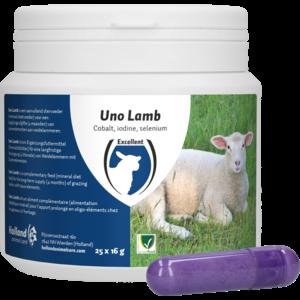 UNO Lamb